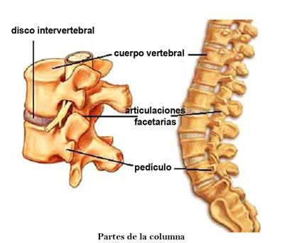 Columna Lumbar. Síntomas, causas y tratamientos de Columna Lumbar
